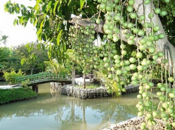 Vẻ đẹp của vườn sinh thái Bảo Gia Trang Viên (Ảnh Collection)