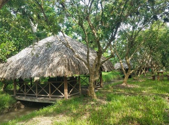 Vườn sinh thái Xẻo Nhum (Ảnh Collection)