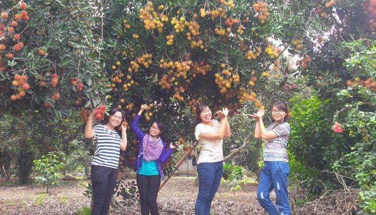 Vườn trái cây 9 Hồng (Ảnh Collection)