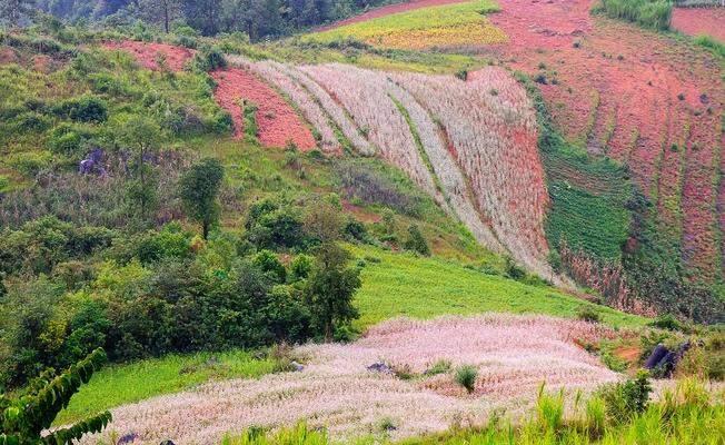 Thung lũng hoa tam giác mạch