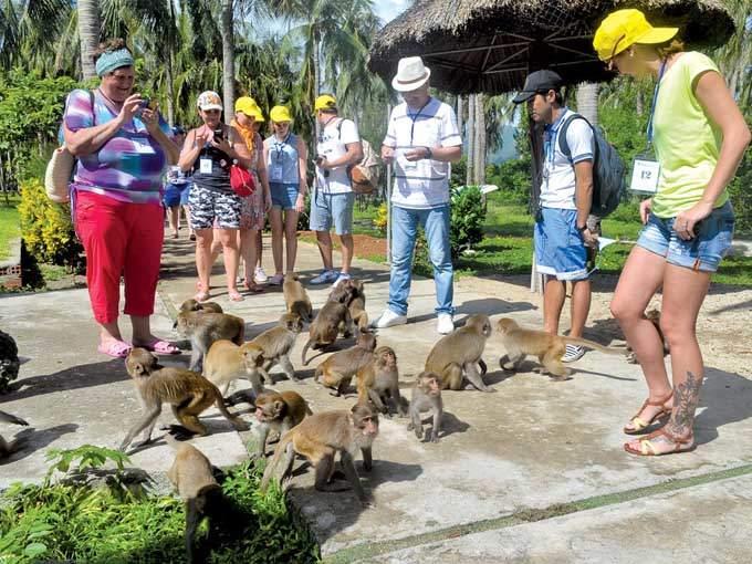 Du khách chơi với những chú khỉ