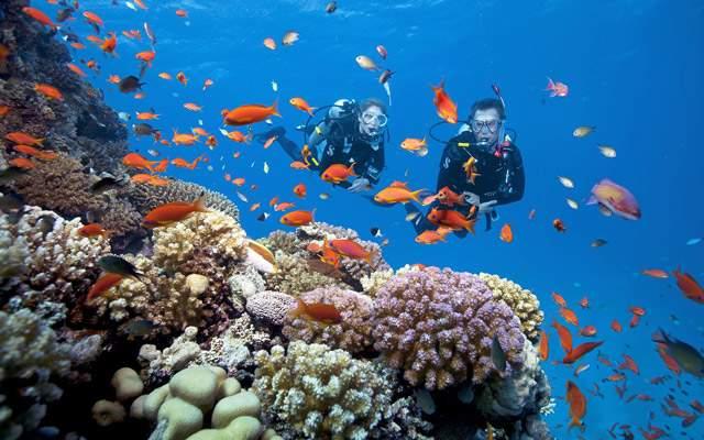 Lặn biển khám phá hệ sinh thái (Ảnh sưu tầm)