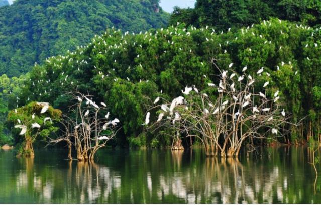 vườn chim vàm hồ