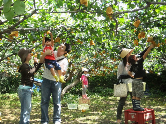 Fruit garden in Ba Lang tourist area (Photo Collection)