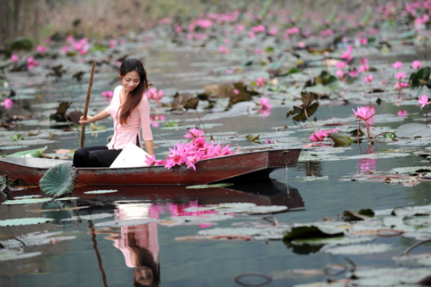 The beauty of water lilies (Photo Collection)